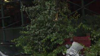 BK Down Tree.jpeg
