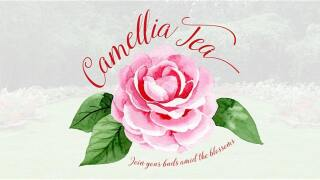 Camellia Tea UL Lafayette.jfif