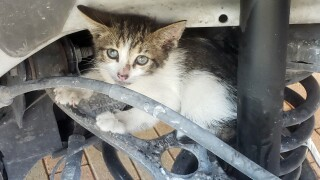 kitten stuck in rear axle of Florida Keys deputy's car