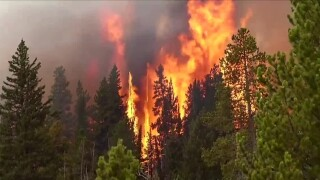 Wildfire burning in trees