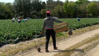 migrant farm worker.PNG