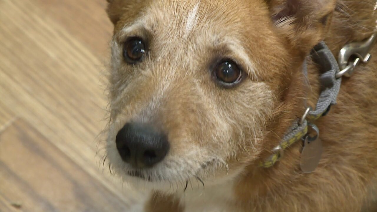 Dog with cancer looking for one last Christmas with newfamily