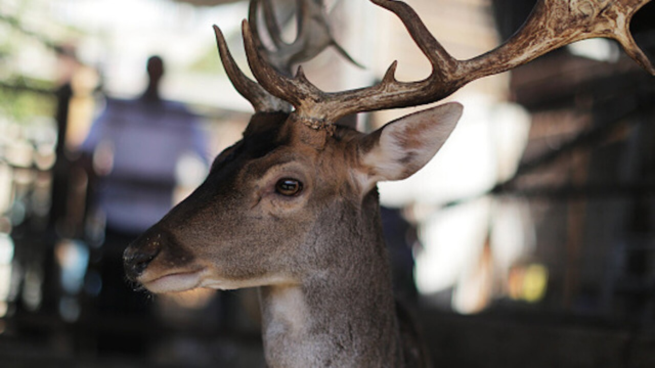 New York man kept deer as pet