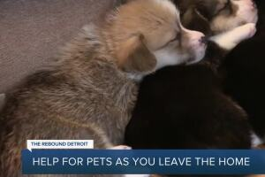 Rebound Detroit: Help for pets as you leave the home