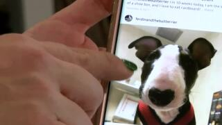 Warning about a dog scam