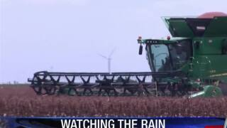 Local farmers watching rain and harvesting what they can