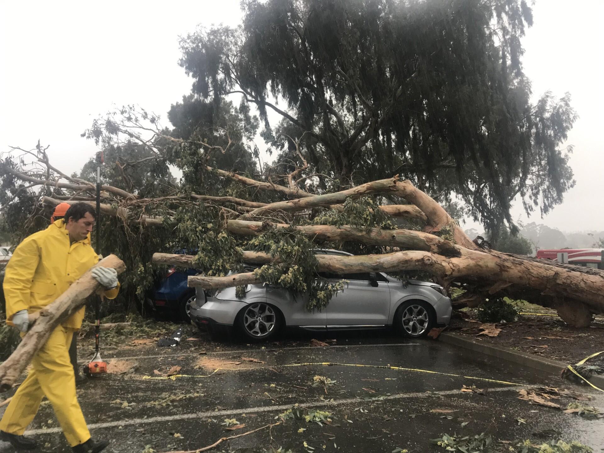 balboa park tree hits car 1