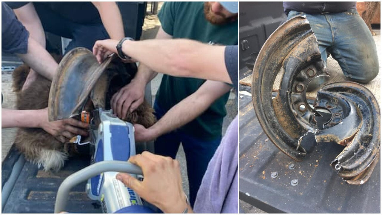 Bozeman firefighters free dog's head from wheel