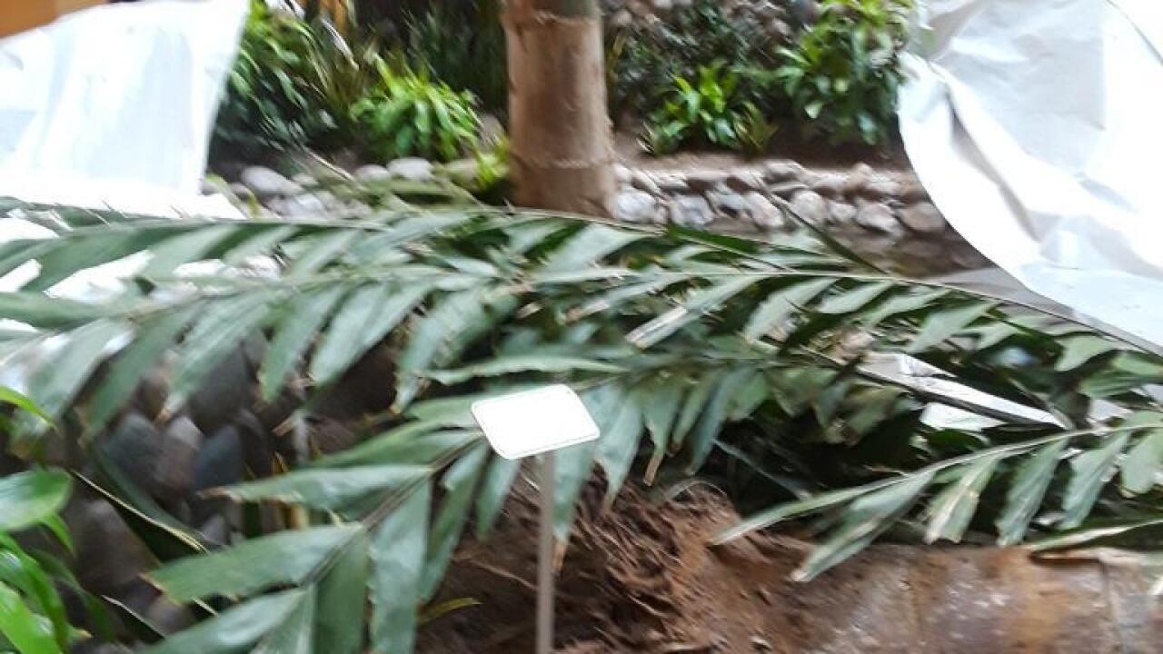 embassy suites tree fall.jpeg