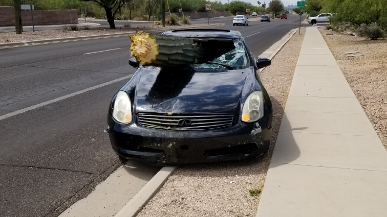 Suspected drunk driver in Arizona ends up with cactus in windshield following crash