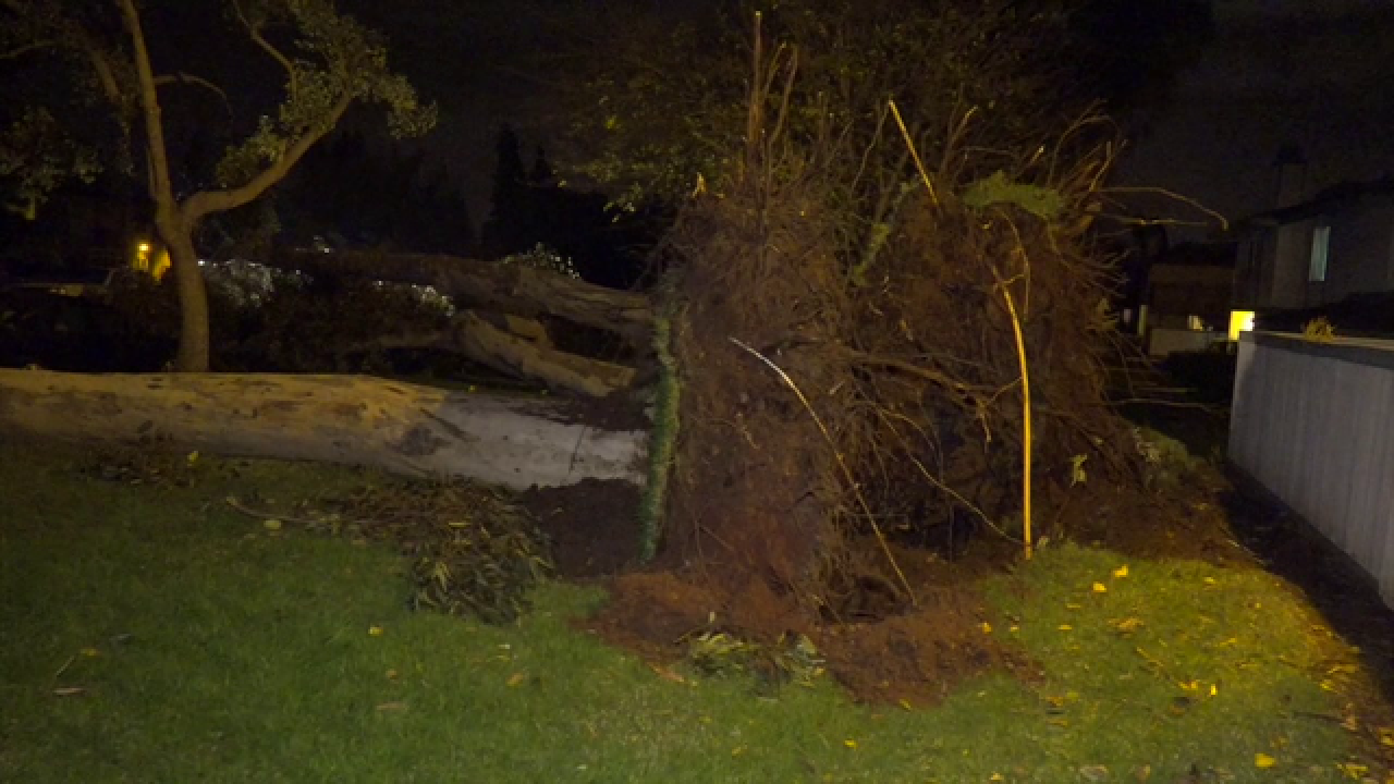 Scary overnight winds topple trees throughout SD