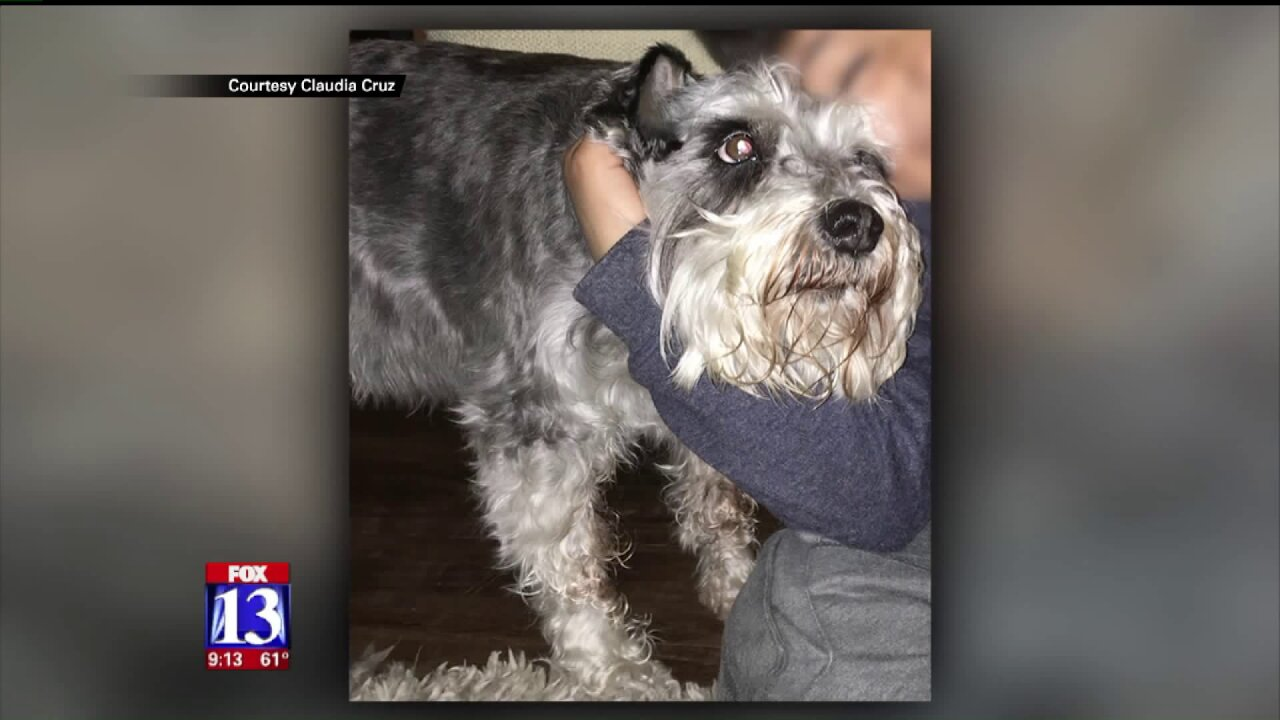 Pair of animal cruelty cases in Utah prompt outrage, an outpouring ofsupport