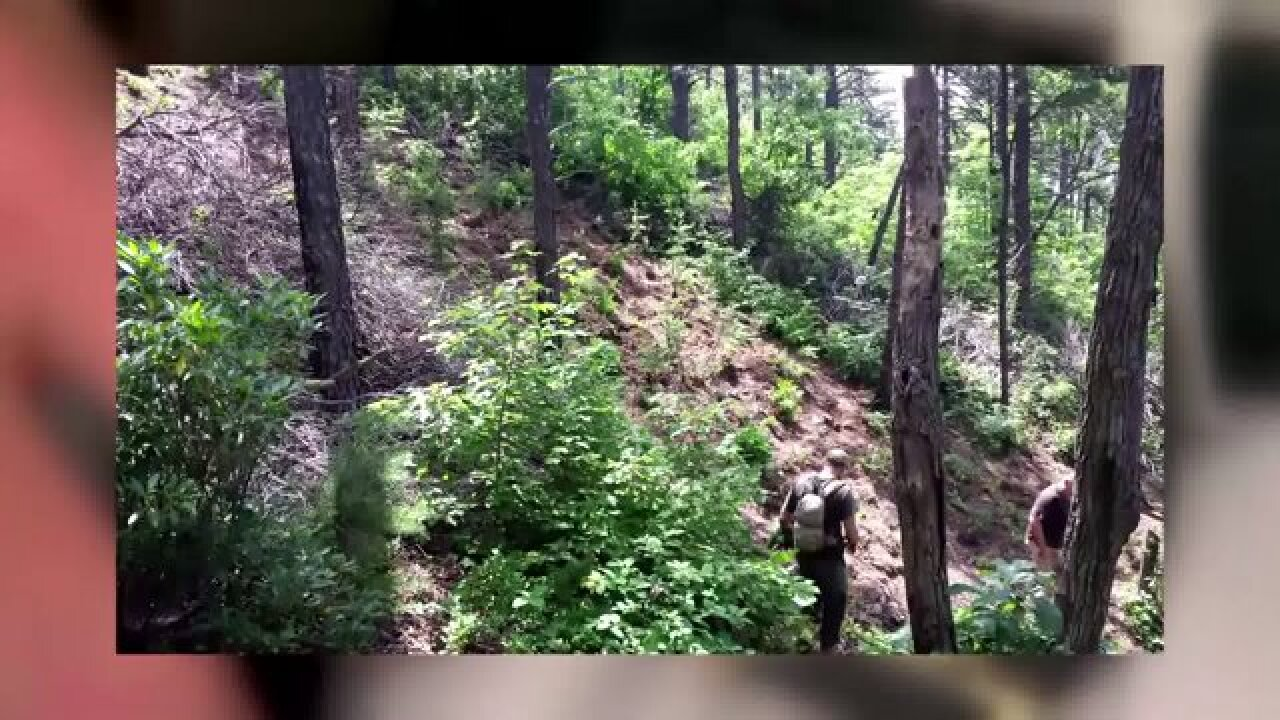 Largest outdoor marijuana grow ever found in Virginia discovered in Patrick County