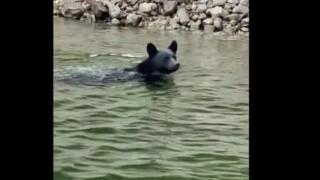 A Bozeman man shows us his bear story