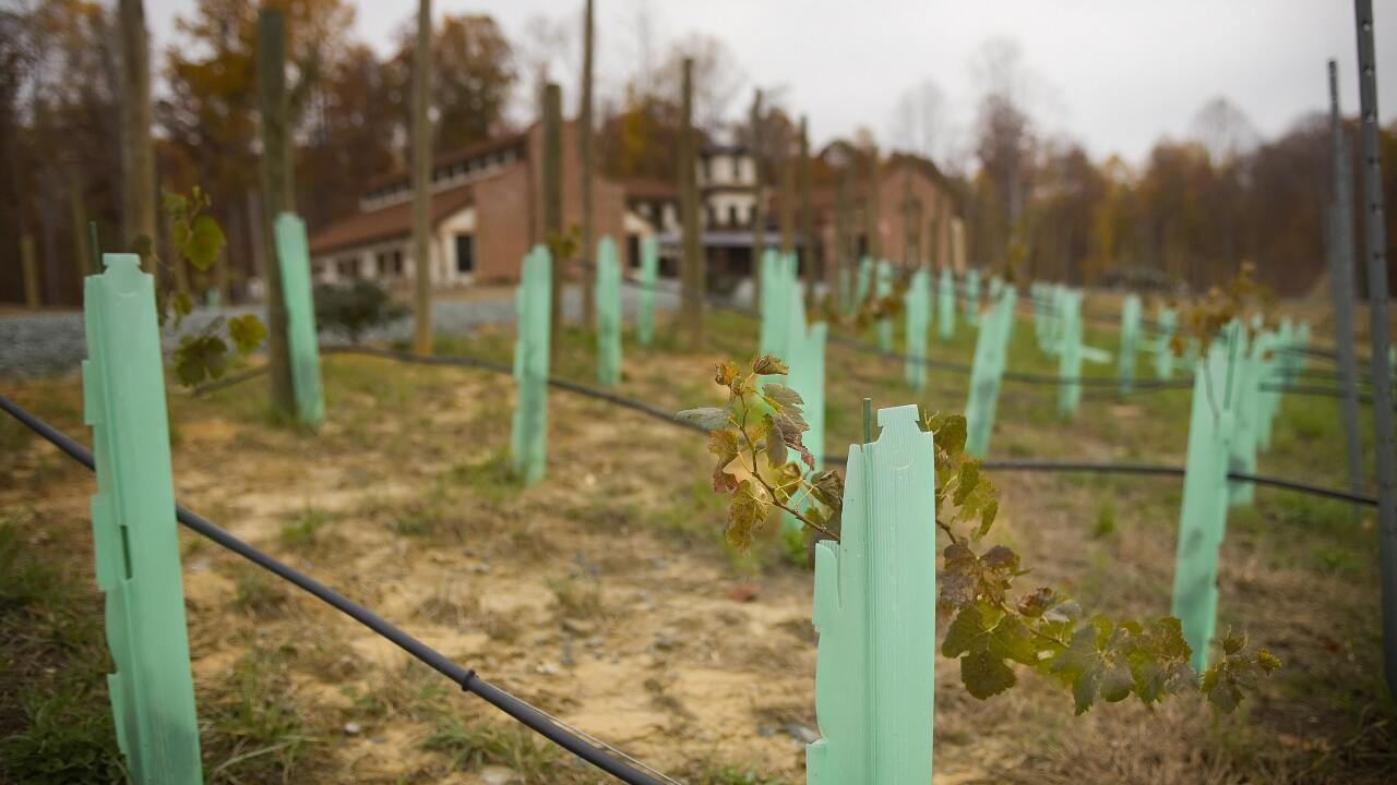 Virginia wine industry looks to bounce back after wettest growing season