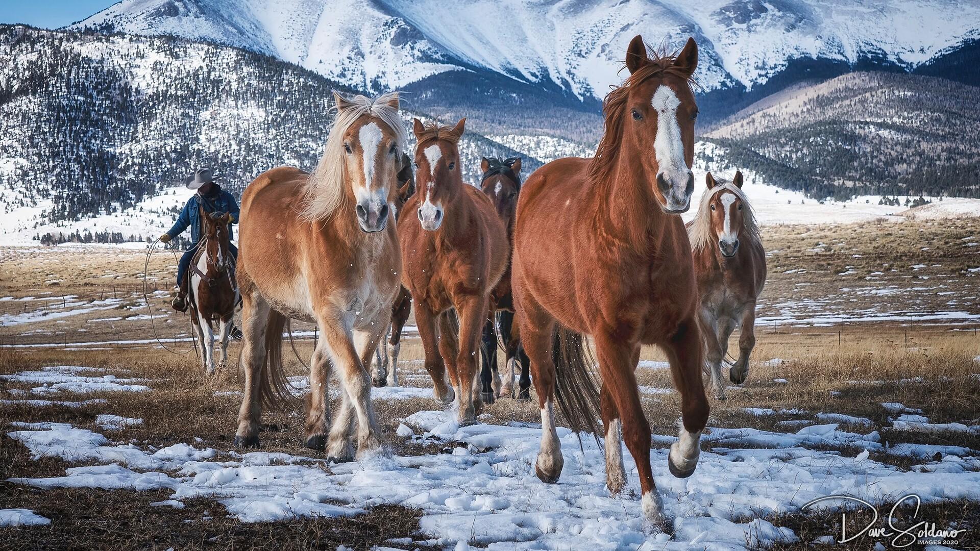 Horses running in Westcliffe David Soldano Photography.jpg