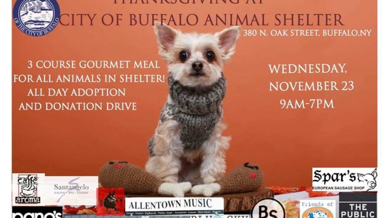 Pet Friendly Thanksgiving Meal At The Buffalo Animal Shelter