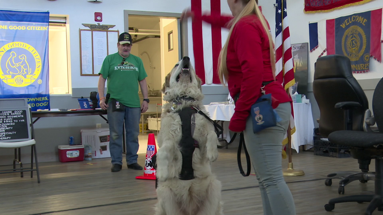 """""""Montana Puppies For Patriots"""" helps veterans and first-responders"""