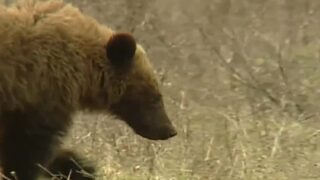 This Week in Fish and Wildlife: Bear safety as temperatures rise