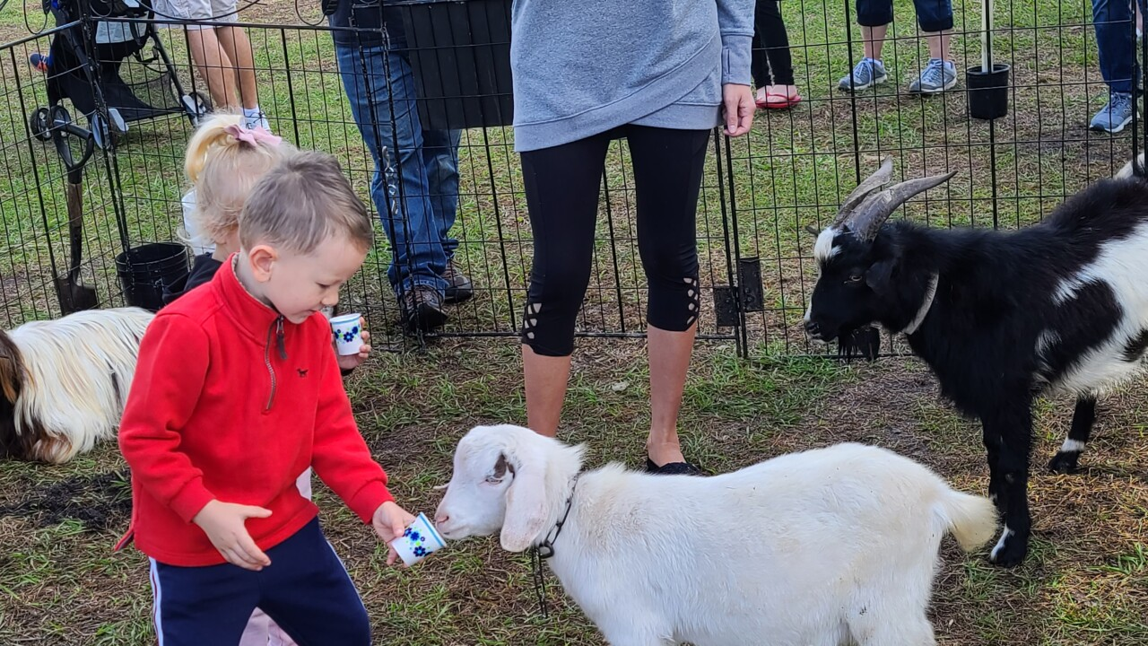 First Methodist petting zoo