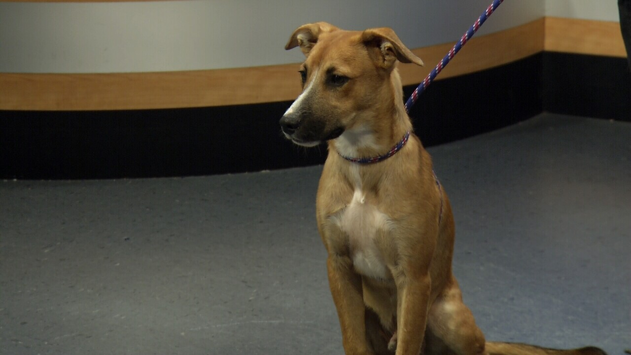 Pet Of The Week: Star