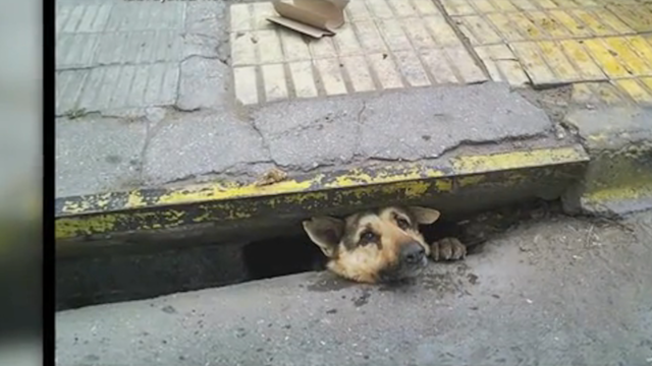 Workers tear up sidewalk to free dog from sewer