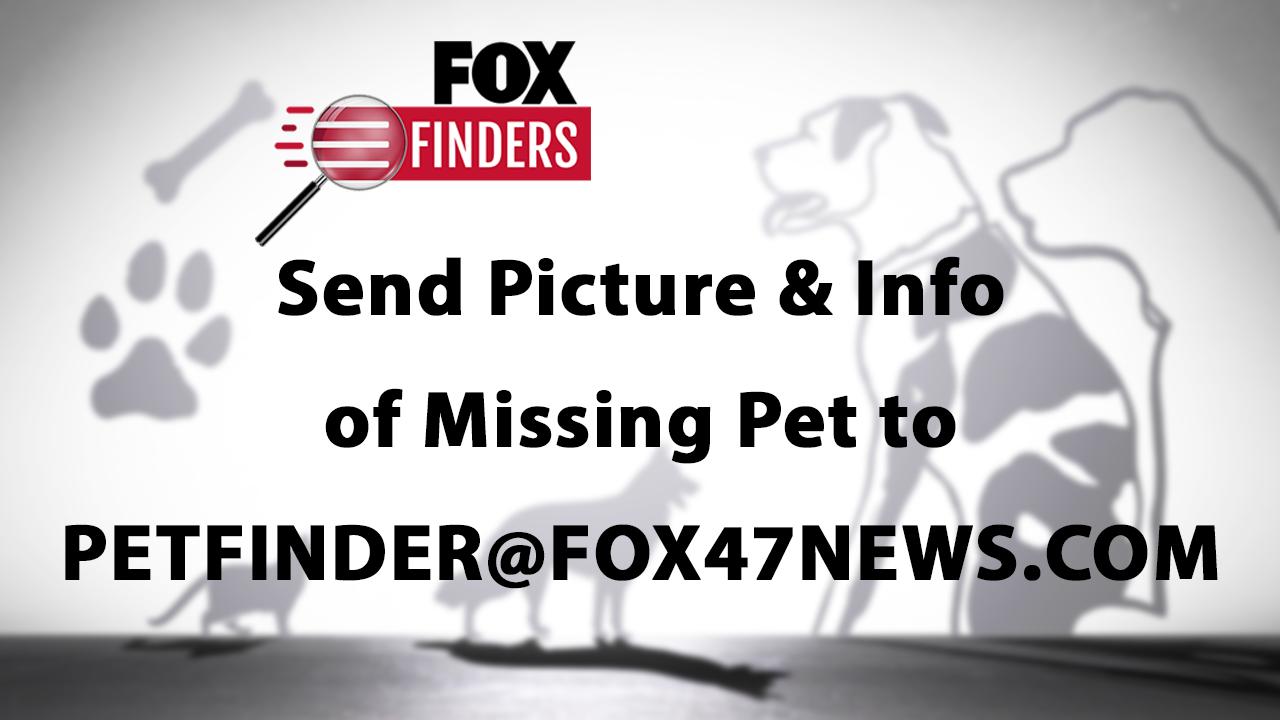 Pet Finder Missing Pets