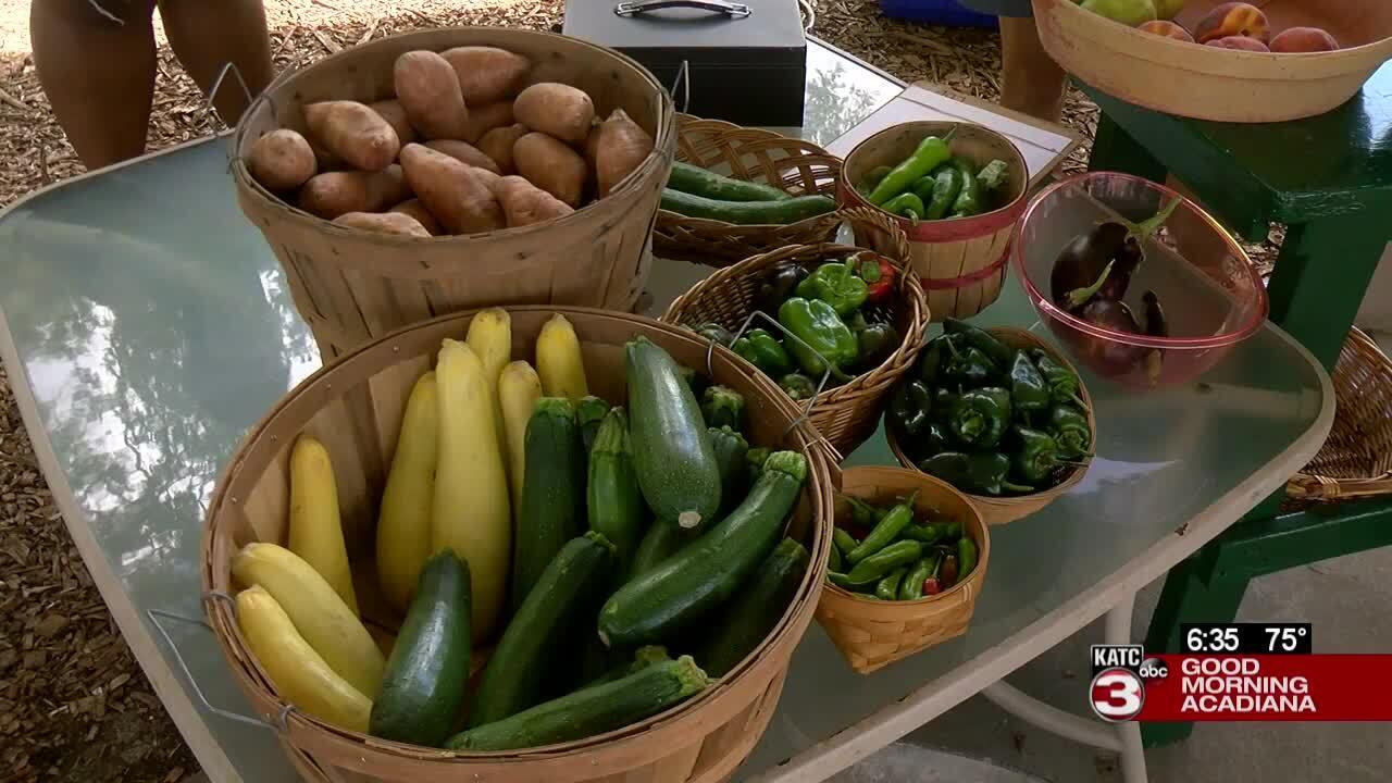 Fightingville Farmer's Market