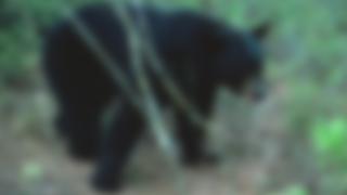 BEAR-SIGHTING-FLORIDA-GENERIC.png