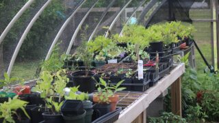 Learn to construct a 'hoop house' at the Learning Garden
