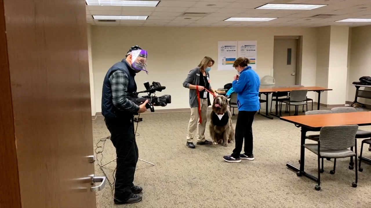 St. E's employees get some TLC from therapy dogs