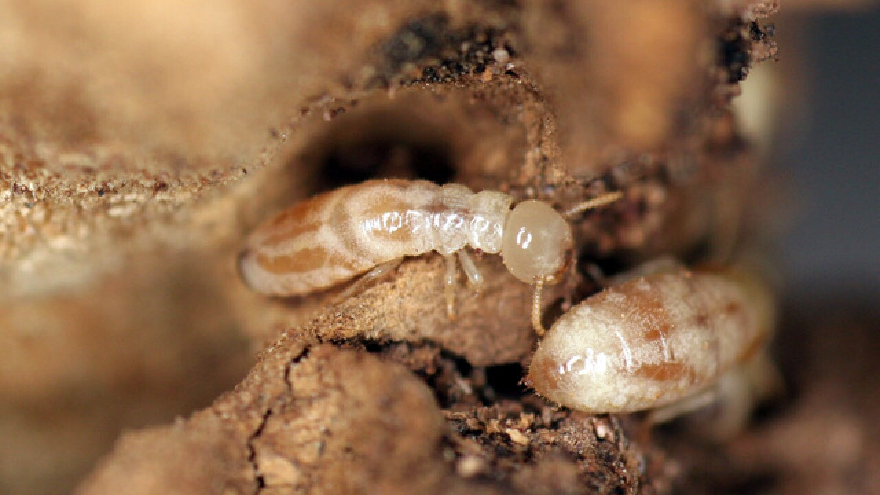 Is your home protected from termite trouble?