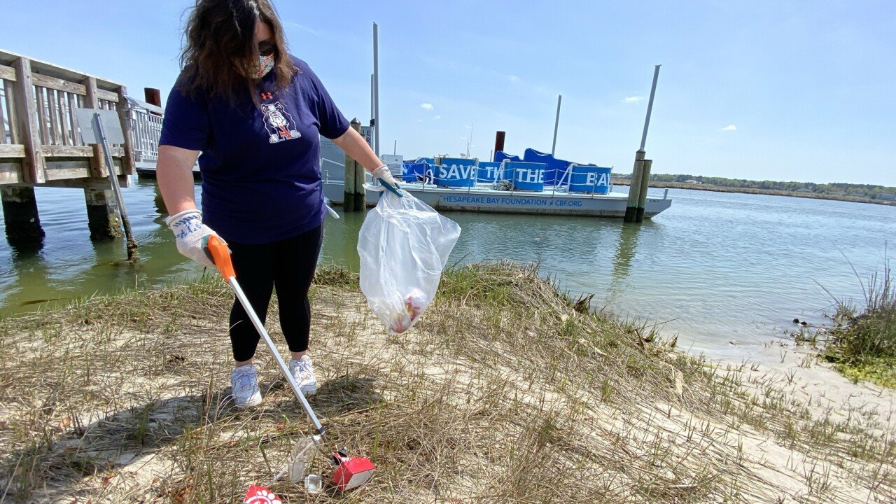 On Clean the Bay Day, participants can clean up litter along shorelines and in parks (Credit Kati McCarter).jpeg