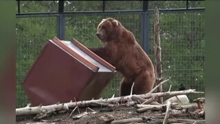 Don't tempt the bears: Keeping food safely stored in the outdoors