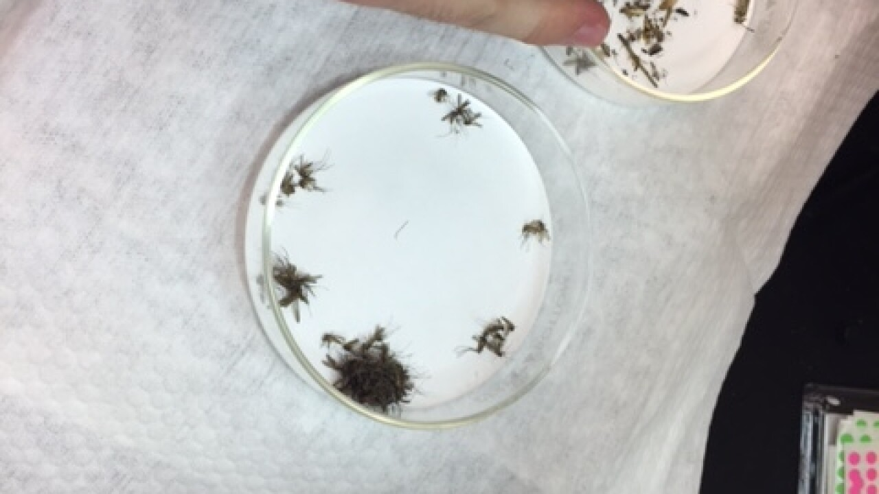 Researchers bracing for West Nile's ugly cousin