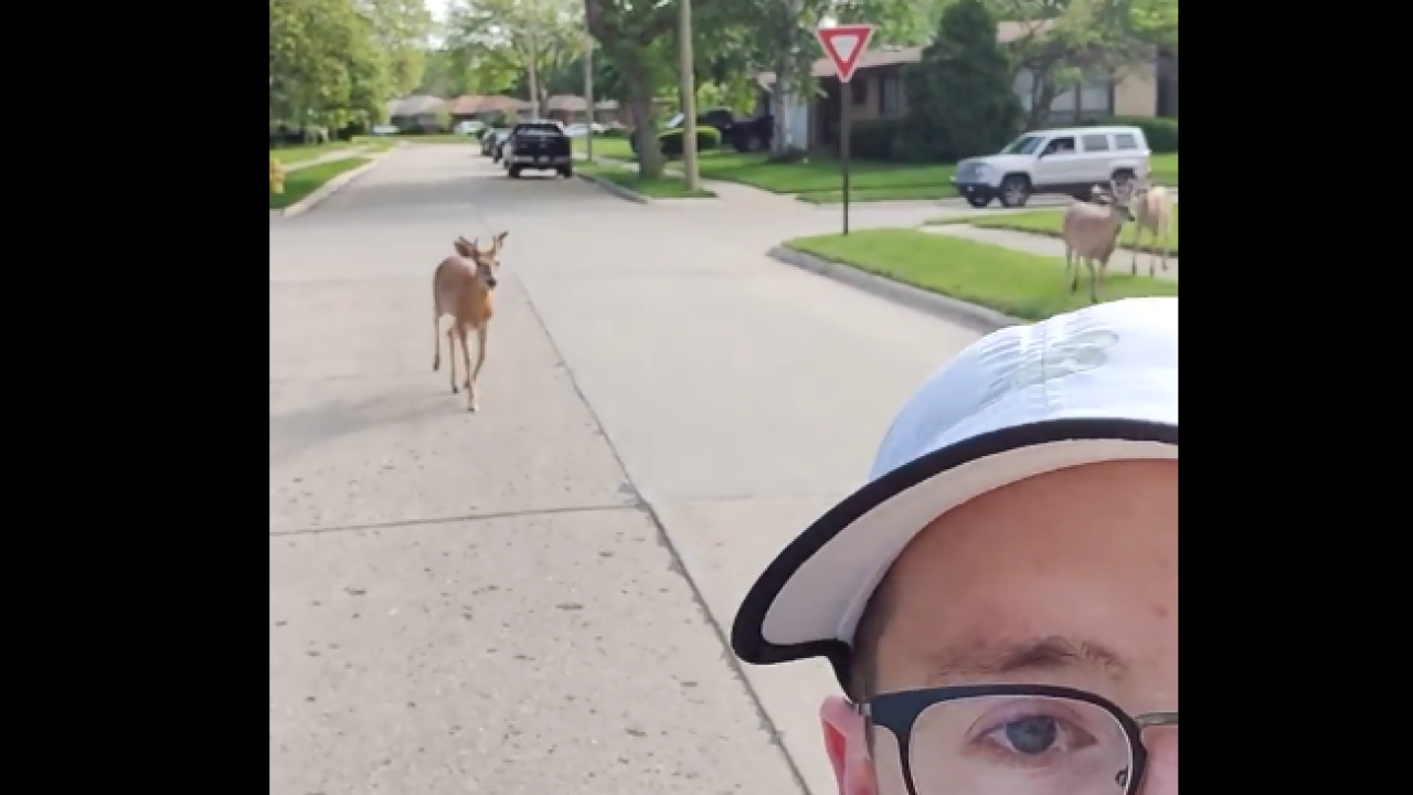A 'deer whisperer' from Michigan had some company on a jog and the video went viral