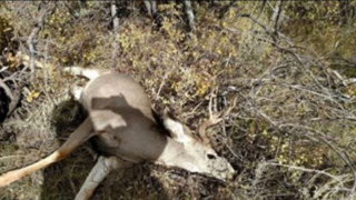 wyoming deer poached.PNG