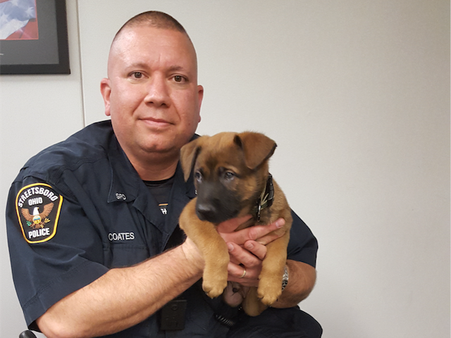 Police puppy love: The newest K9 in Streetsboro is a cute and fierce crime fighter in training