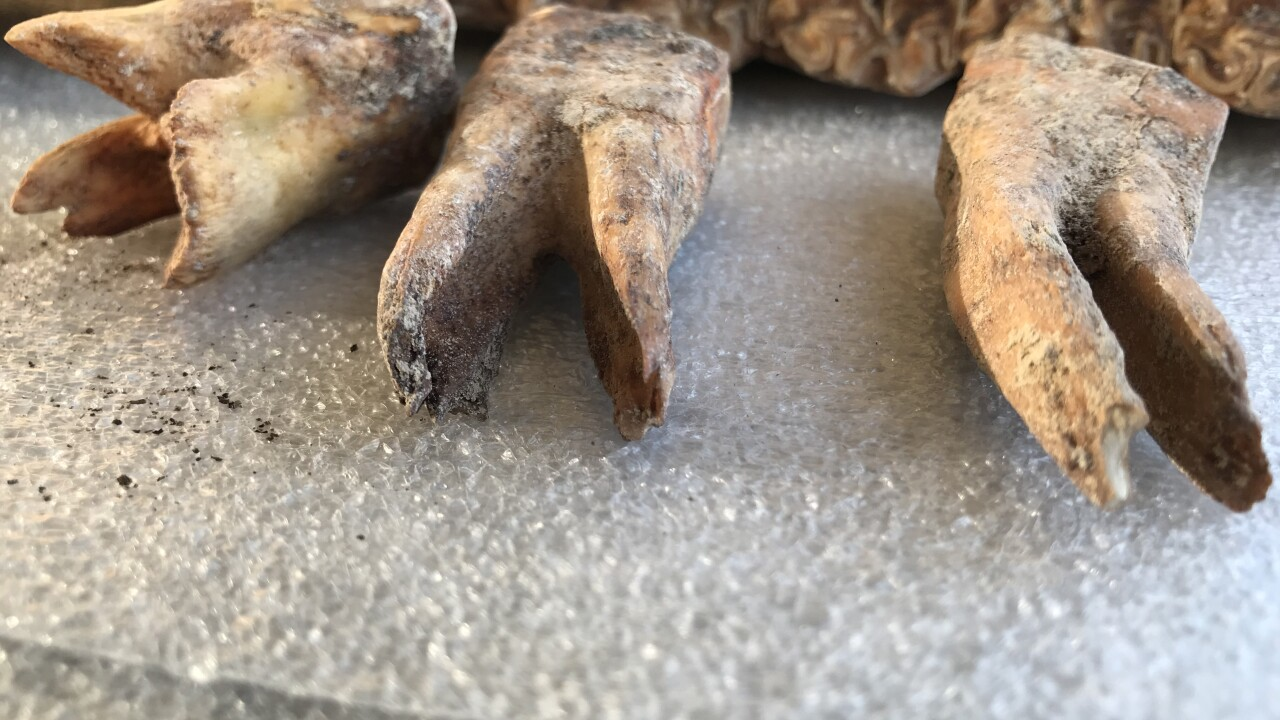 A new discovery in an ice age mystery from a Las Vegas backyard now as the attention of federal officials after well-preserved bones including parts of a jaw and teeth have been found.
