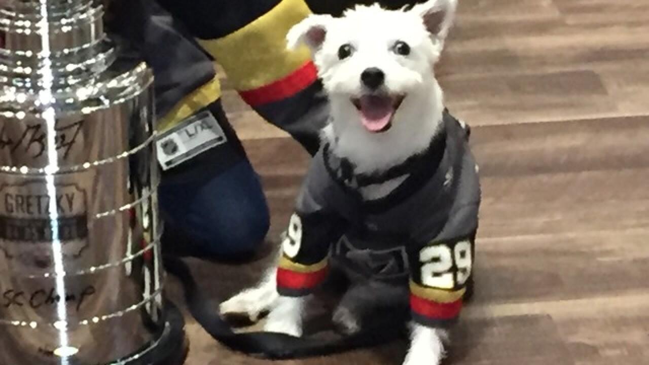 Bark-Andre Furry, Ovi the Bulldog meet in Vegas
