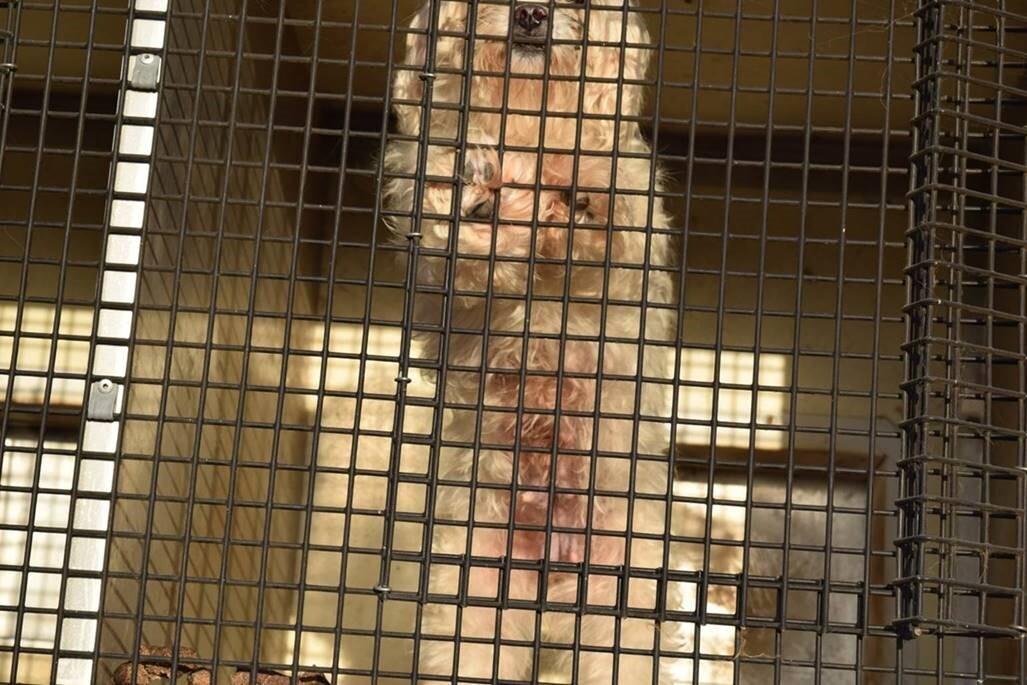 Animal Cruelty 6.jpg