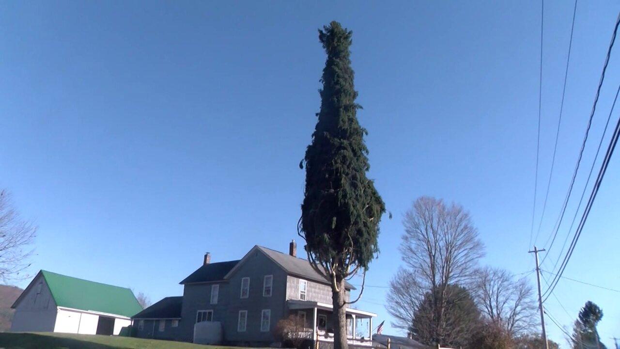 Rockefeller Center Christmas Tree selected for 2020