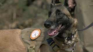 Valley Search & Rescue dog