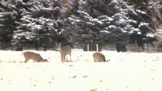 Hunters: You can help track Chronic Wasting Disease