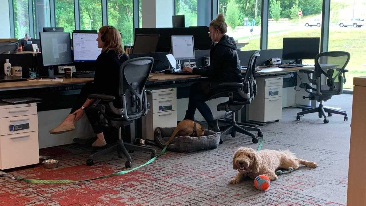Dog Friendly Workplace