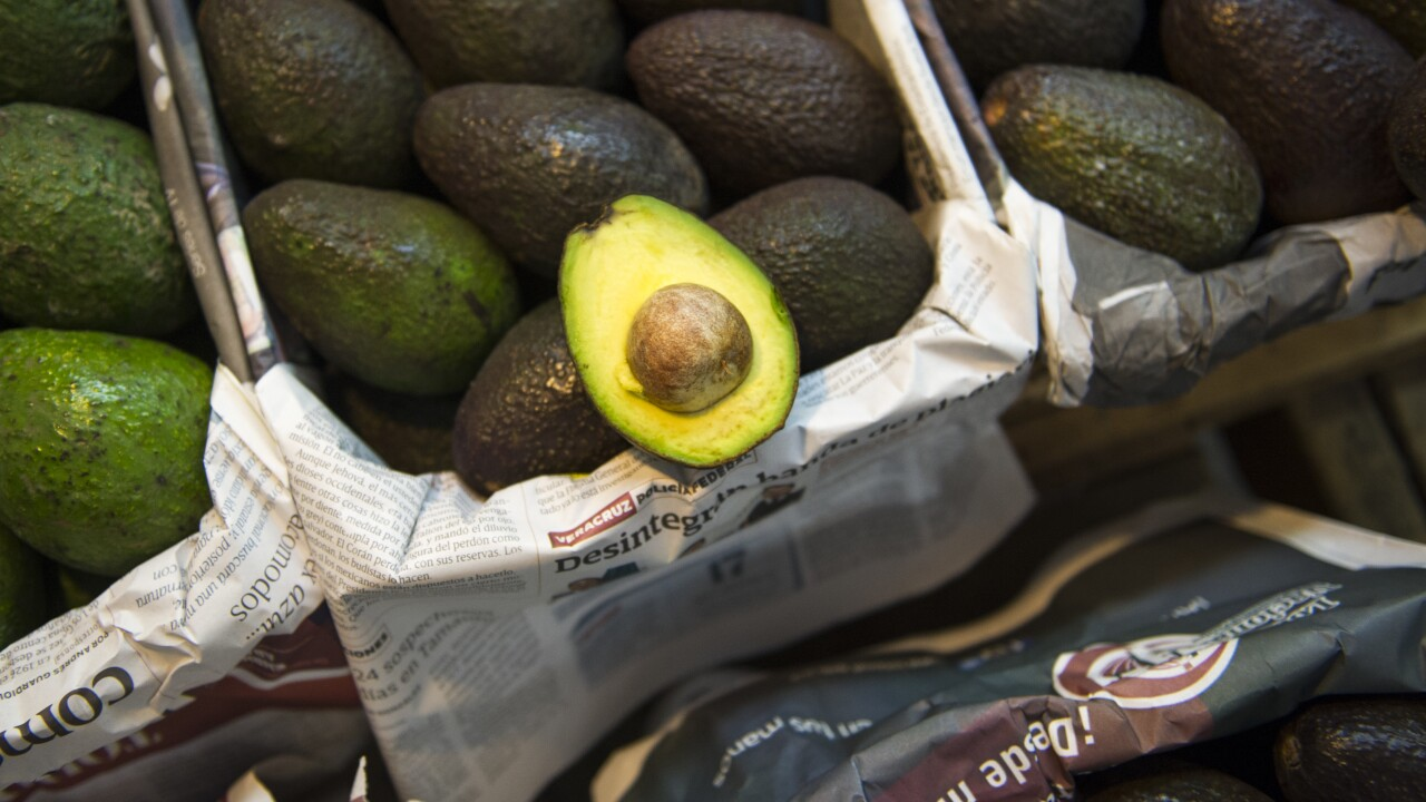 Mexican cartels seize the avocado market