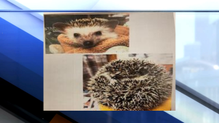 Hedgehog stolen from Green Bay Wildlife Sanctuary