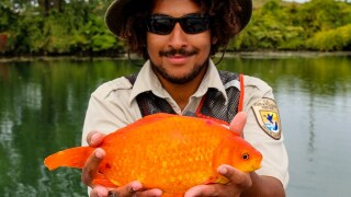 Waterkeeper shows why you shouldn't flush goldfish down the toilet