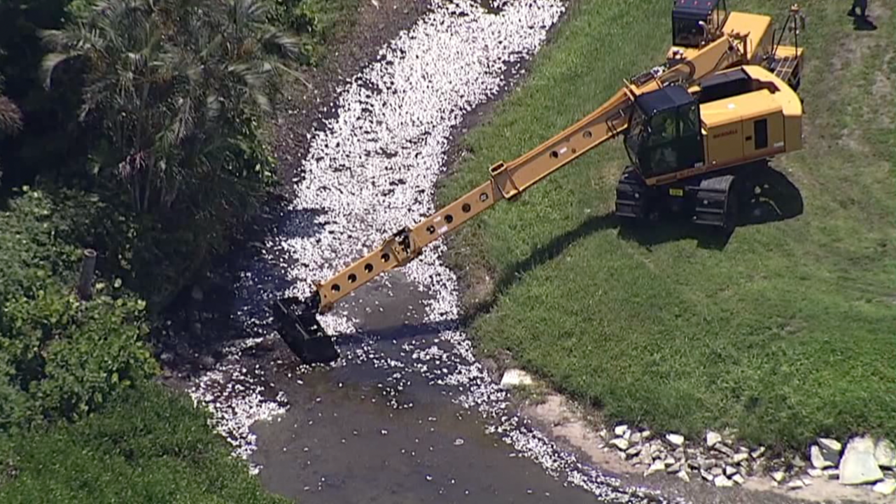 Dead fish are removed due to red tide in Tampa Bay