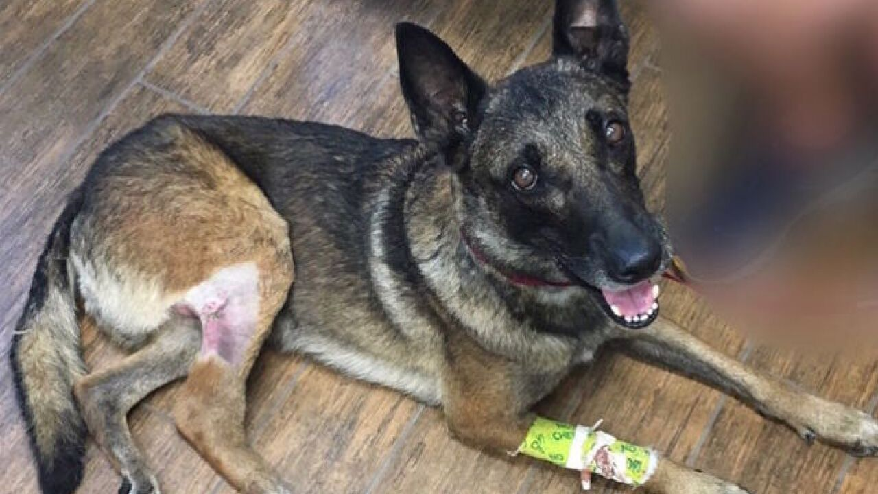 Glendale K9 shot twice by suspect, recovering